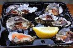 oysters on Kangaroo Island