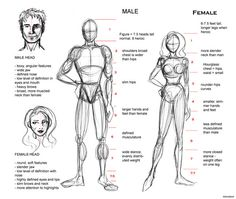 Proportion Guide by AlenaLane on deviantART
