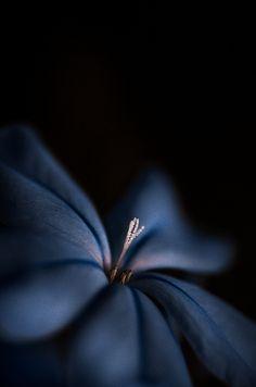 A Pale Indigo | Flickr - Photo Sharing!
