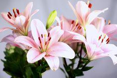 lilis flor - Buscar con Google