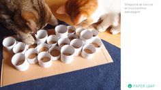 DIY for Cat - cat feeding game