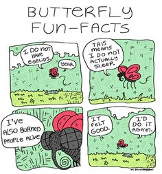 Butterfly Fun Facts.