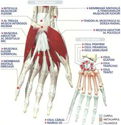 The Human Body, Sign Language Alphabet, Medical Billing And Coding, Muscle, Metabolism, Nursing, Science, Couture, Learning