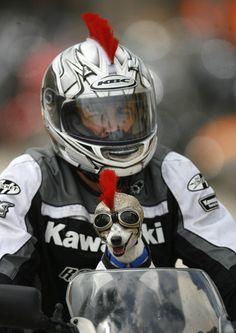 Riders and their pets take in the sights and sounds along Main Street during the first day of Bike Week 2012 in Daytona Beach on Friday, March 9, 2012.