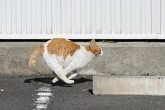 running cat 11