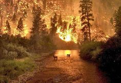 Forest fire... taken by a forest fighter. Not to be used for commercial reasons.