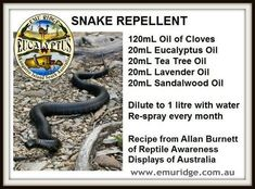Anything to keep those snakes away !!- I don't even live in a country that has snakes, but i still feel the need to know this stuff Snake Repellant, Insect Repellent, Spider Repellant, Mice Repellent, T Tree Oil, Keep Snakes Away, Backyard Trees, Backyard Camping, Backyard Landscaping
