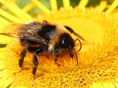 """Evidence that controversial pesticides linked to """"large-scale population extinctions"""" of bees should be banned has got stronger since a moratorium on their use was introduced three years ago, according to a new report. Scientists at Sussex University carried out a review of the scientific studies since the European Union restricted the use of neonicotinoid pesticides on flowering plants in 2013."""