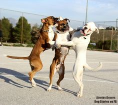 Boxers! Lol