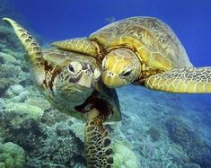 TURTLE HUGGING - Pixdaus