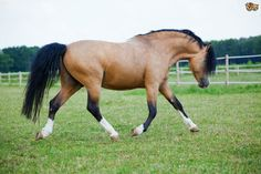 Maintaining Paddocks Equals Healthier Horse   Pets4Homes