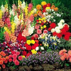 Summertime bulb garden - 100 flower bulbs  Order at http://www.amazon.com/Summertime-bulb-garden-flower-bulbs/dp/B007DSQFNS/ref=zg_bs_3745171_12?tag=bestmacros-20