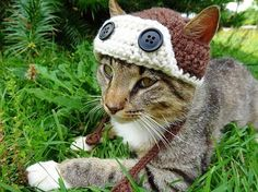Aviator Cat Hat Pattern Aviator Hat for Cats Crochet Pattern Cat Dog Costume, Costume Chat, Cat Costumes, Knitting Projects, Crochet Projects, Chat Crochet, Free Crochet, Bonnet Crochet, Dog Clothes Patterns