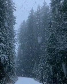Snow Forest, Misty Forest, Black Wallpaper, Nature Wallpaper, Amazing Places On Earth, Christmas Tree Farm, Killua, Nature Scenes, Amazing Flowers