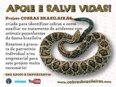 Projeto COBRAS BRASILEIRAS, criado para identificar cobras e como auxiliar no tratamento de acidentes com animais peçonhentos da fauna brasileira. Estamos à procura de patrocínio individual e/ou empresarial para este projeto muito necessário! SEU APOIO É IMPORTANTE!