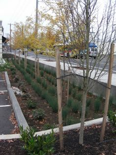 Commercial rain garden design by Planning Solutions, Inc.