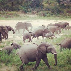 Elephant Stampede- Taken by me while visiting the Sabi Sands region of Kruger Park, SA #elephant #travel #africa #kruger