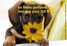 Hey un bisou parfumé rien que pour toi #bisous chiens chiot fleur drole mignon