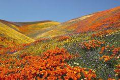 Flores pelo mundo – Assista ao espetáculo das  Belezas Divinas – Luxo e viagens