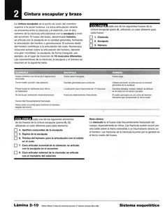 Para colorear sistema esquelético  Miranda Fisioterapia blog