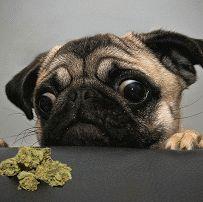 Funny dog gif