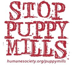 Help!! Im doing a research paper on why Im against Puppy Mills.?