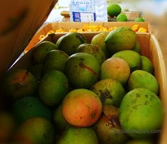 Mangoes, seasoning peppers and limes at a farm in Grand Cayman, Caribbean