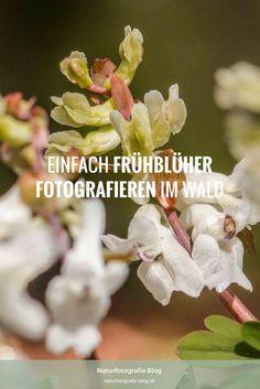 Frühblüher fotografieren: Tipps und Bilder zum Ablichten von Leberblümchen und Co. gebe und zeige ich Dir hier.  #Frühblüher #Fotografieren #Blumen #Pflanzen #Makrofotografie #Makro #Leberblümchen #Lerchensporn