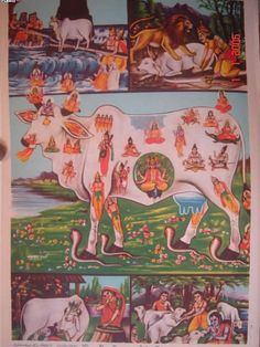 kamadhenu - Another  view of the kamadhenu cow containing all the deities (mid-1900's bazaar art)