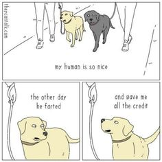 35 Random And Hilarious Pictures From Today's Internets Funny Animals, Cute Animals, Funniest Animals, Best Funny Pictures, Laughter, Peanuts Comics, Give It To Me, Humor, Pets