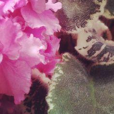 0x386: Květina / Flower (18) Shag Rug, Instagram, Home Decor, Shaggy Rug, Decoration Home, Room Decor, Blankets, Home Interior Design, Home Decoration