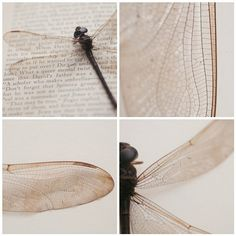 Dragonfly Love.