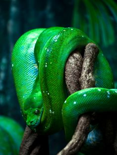 Image Gallery neon green snake #1: 17fa5ce0a3ab86be51dc7ba1101b197f