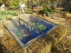 hay bales cold frame