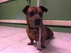 www.PetHarbor.com pet: **LACO** - 1.A5028404  CUTE BOY, GREAT PERSONALITY