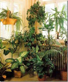 Combining Green Plants In Displays