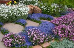Turkish Veronica, Veronica liwanensis  moderate to dry water use blue, Apr-June, sun/part sun perennial groundcover