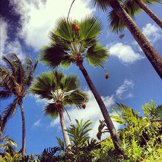 Palm Trees, Grand Hyatt, Kauai