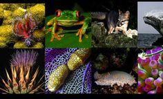 Biodiversidad: presentada la Estrategia Mexicana para la Conservación Vegetal 2012-2030