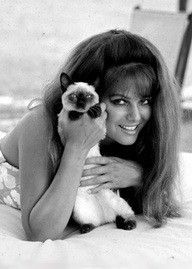 Claudia Cardinale with Siamese cat More Tap the link Now - Luxury Cat Gear - Up to off and Free Worldwide Shipping! Claudia Cardinale, Siamese Kittens, Cats And Kittens, Crazy Cat Lady, Crazy Cats, I Love Cats, Cool Cats, Celebrities With Cats, Celebs