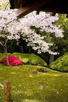 Japanese Tea Garden, San Francisco by Ashish Tibrewal on Flickr. Japanese Garden Design, Chinese Garden, Japanese Gardens, San Francisco Girls Trip, Garden Waterfall, California Dreamin', Outdoor Spaces, Outdoor Gardens, Backyard