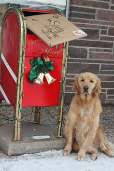 Precious Christmas card idea with your pet.   Golden Retreiver | Pet Photography | Holiday Photo Session Idea | Dogs | Puppy | Puppies | Dog