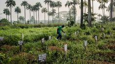 Cementerio de  Foya, Liberia