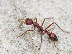 It's summer and not just kids are out to play. Ants are emerging too. Read about their activity and behavior so you know what to expect.