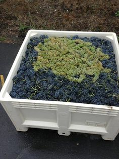 From Masquerage Wine Company - Sugarloaf Vineyard Syrah