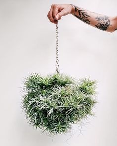 Air plants are such fun. Balcony Plants, Outdoor Plants, Air Plants, Garden Plants, Air Plant Display, Plant Decor, Interior Garden, Cacti And Succulents, Houseplants