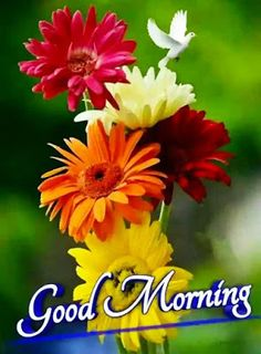Nice Good Morning Images, Good Morning Wishes Gif, Good Morning Love Gif, Good Morning Flowers Pictures, Good Morning Greeting Cards, Good Morning Friends Images, Good Morning Dear Friend, Good Evening Greetings, Lovely Good Night