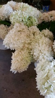 Hydrangeas Available In August