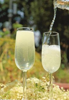 How to make elderflower champagne Wine Drinks, Alcoholic Drinks, Cocktails, Cooking Wine Recipes, Elderflower Champagne, Passover Recipes, Passover Meal, Bridal Shower Wine, Vintage Tea Parties
