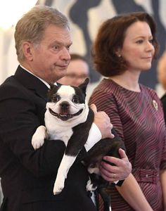 Lennu, a much-loved celebrity in Finland, is a Boston terrier with a lolling tongue whose master, the president, is up for re-election. But an illness has apparently kept Lennu off the campaign trail. You Funny, Funny Dogs, Cute Dogs, Hilarious, Funny Memes, Funny Stuff, Dog Stuff, Random Stuff, Funny Quotes